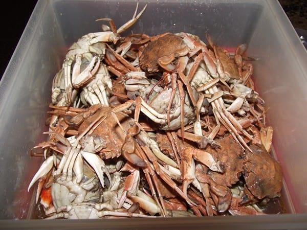 cangrejos cocidos