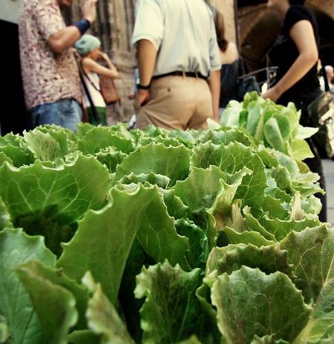 fibras verduras